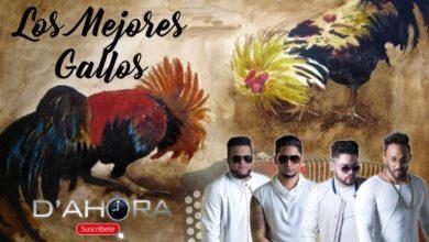Photo of El Grupo D'Ahora – Los Mejores Gallos (En Vivo)